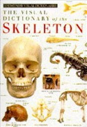 Visual Dictionary Of Skeleton -